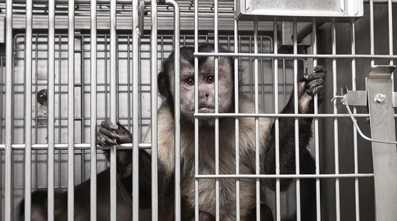 stop vivisection petition